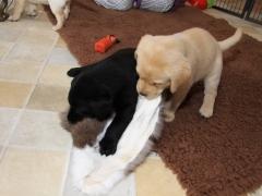 Avanti und Aron mit Kaninchenfell