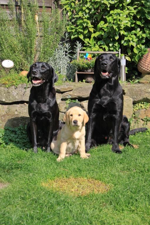 Aron mit Familie