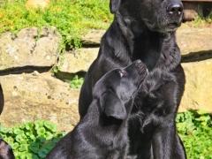 Avanti liebt große schwarze Hunde