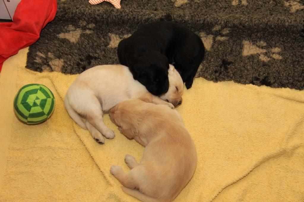 Das Trio schläft!