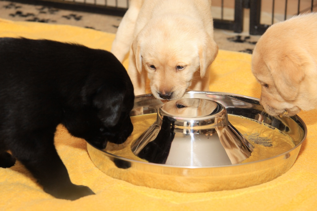 Das Trio beim Fressen
