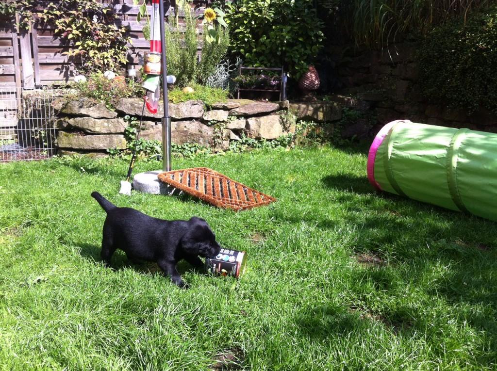 Prägung im Garten