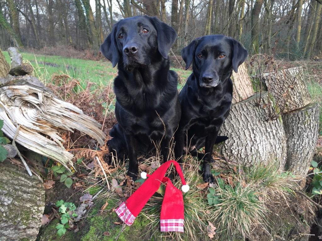 Frohe Weihnachten wünschen Finja vom Gut Stock & Gwen von Wiedenberg