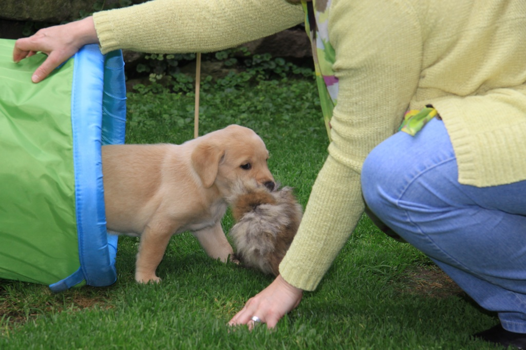 Aron zeigt seinem Besuch ein Kaninchenfell