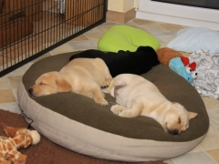 Das Trio ist müde!