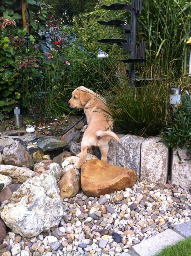 Aron erkundet selbstständig den Brunnen!