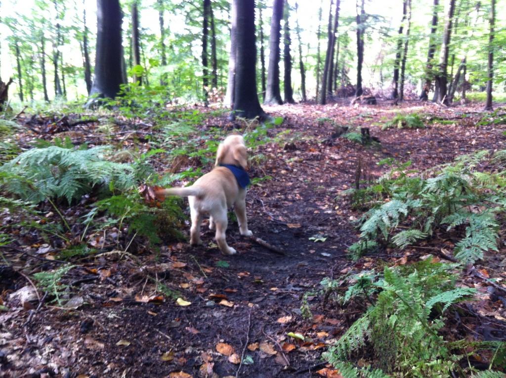 Aron allein im Wald!